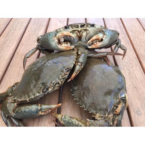 Madagascar Mud Crab
