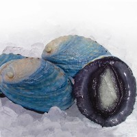 PAUA WHOLE (BLUE)